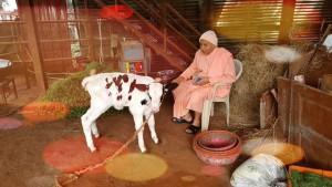 swami Bhaskaraanndji-Cow